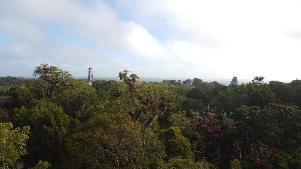 View from the top of Temple III Tikal