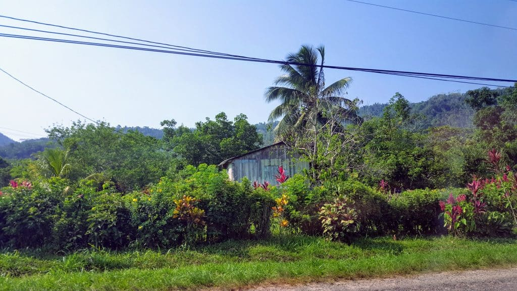 Palm trees and a house along Hummingbird Highway in Belize