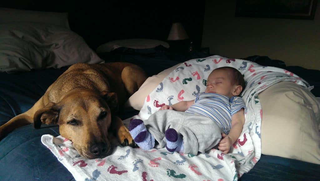 dog and baby laying down on a bed next to each other