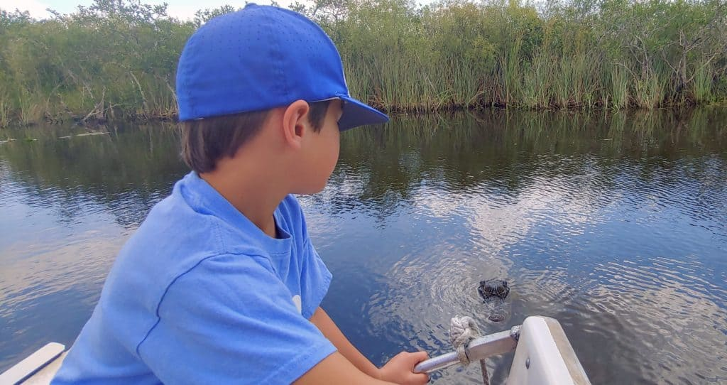 Boy in an airboat in the everglades looking at an alligator in the water