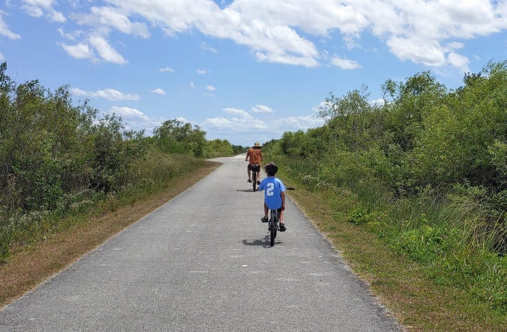 Father and son riding bikes looking for alligators in the everglades
