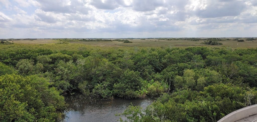 veiw from the Shark Valley observation tower in Everglades National Park