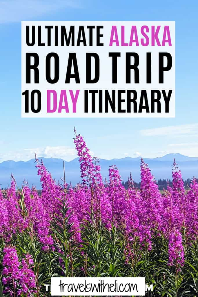 Pink Fireweed in front of snow covered mountains in Homer, Alaska - Ultimate Alaska Road Trip 10 Day Itinerary