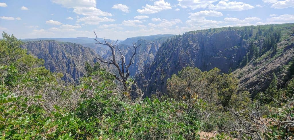 a tree and bushes in front of the Black Canyon of the Gunnison