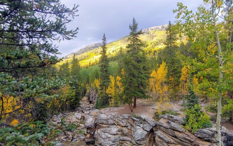 Aspens turning yellow in the fall on a mountainside in Colorado